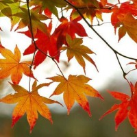 4. September i ord og begivenheder
